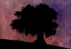 Shadowy Tree -